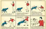 Что делать при нападении собак