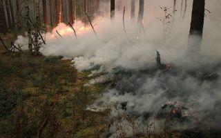 Торфяной лесной пожар