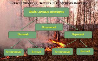 Лесные пожары: основные виды и классификация