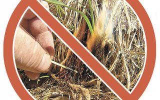 Пал сухой травы: опасность, ответственность и последствия
